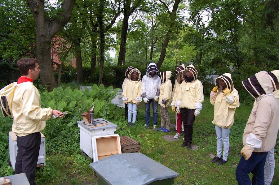 Klub Starego Odkrywcy – owady